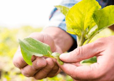 Agricultura ecológica. Pasado, presente y futuro.